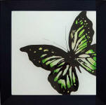 framed green butterfly art